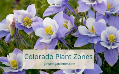 What Plant Hardiness Zone Is Colorado?