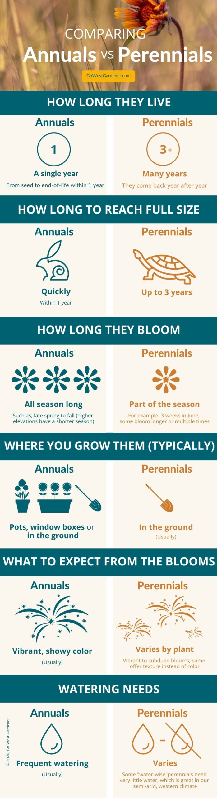 Infographic showing differences between annuals vs perennials