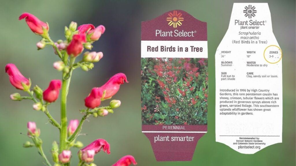 This plant tag shows USDA plant hardiness zones 3-9.