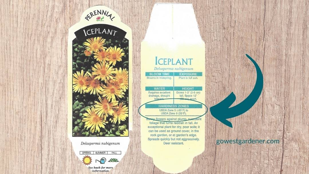 This plant tag for this iceplant says USDA plant hardiness zones 5-9.