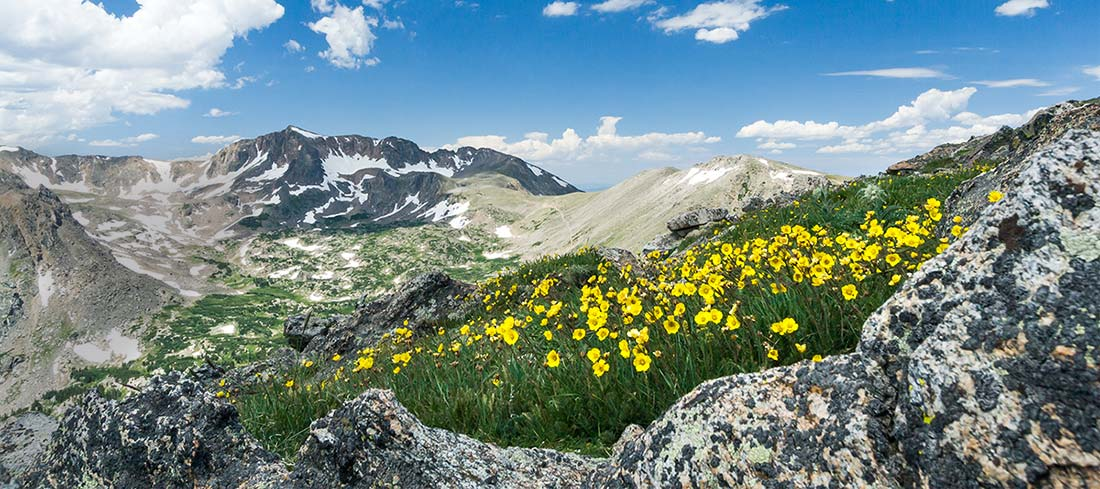 Alpine flowers in the Rocky Mountains can withstand colder winter temperatures. They have lower plant hardiness zones.