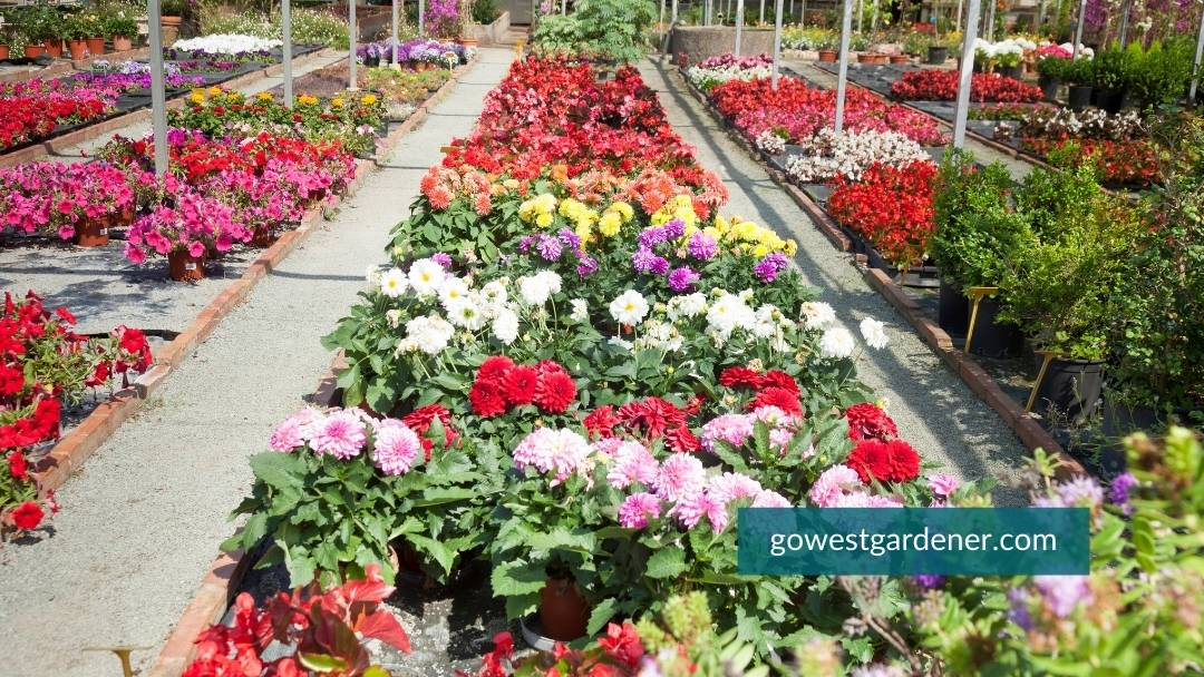 The annual section of flowers at the garden center will have a lot of big color.