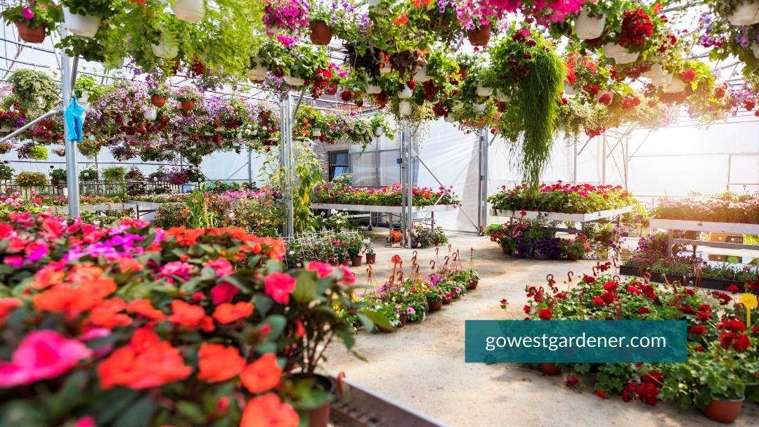 The annuals are also usually in a greenhouse or covered.