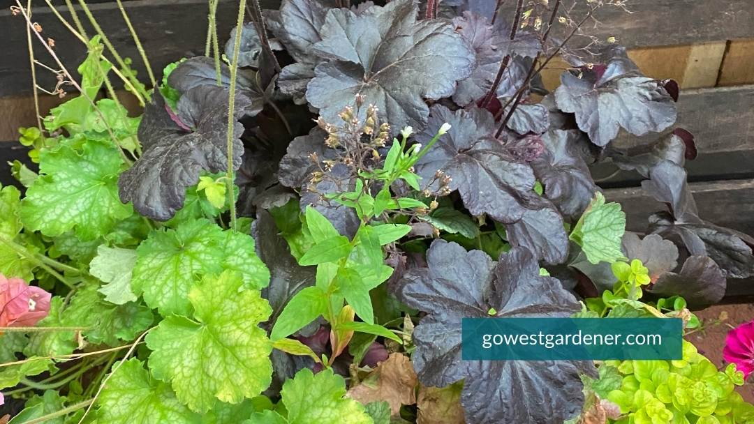 You can plant perennials in your containers. They will more likely give you interesting leaves and textures than last-all-summer flowers.