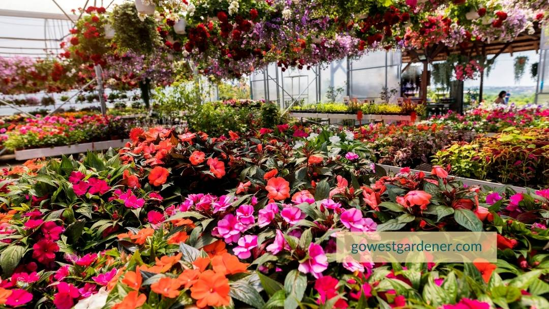 With row after row of flowers at the garden center, how do you know which flowers to choose? These tips can help.