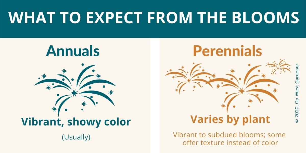 What to expect from the blooms of annuals and perennials