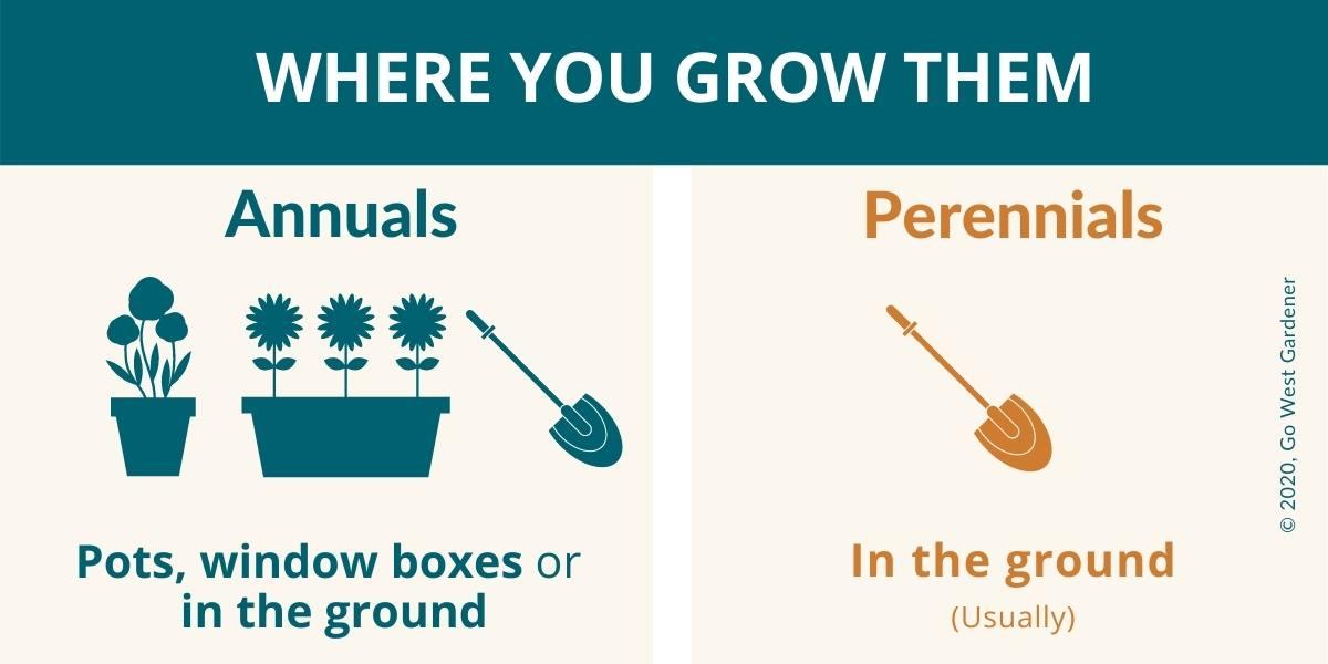 Where you grow annuals vs where you typically grow perennials