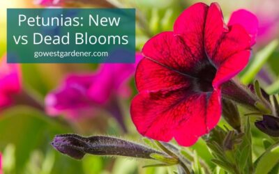 VIDEO: How to Take Care of Petunias, So You Aren't Trimming Off the Wrong Parts