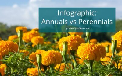 Infographic: Key Differences Between Annuals and Perennials