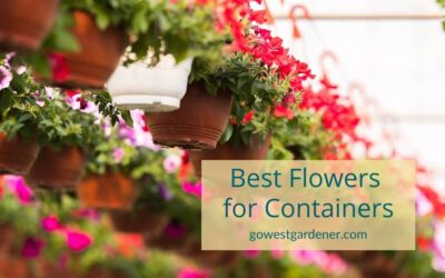 VIDEO: What Are the Best Flowers to Grow in Containers for Showy Color?