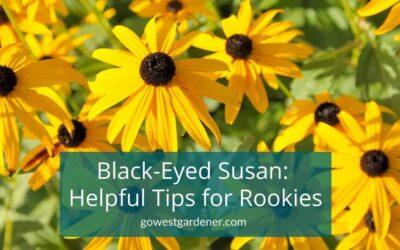 Black-Eyed Susan: How to Tell a Biennial vs Perennial (Short-Lived vs Long-Lived Plant)