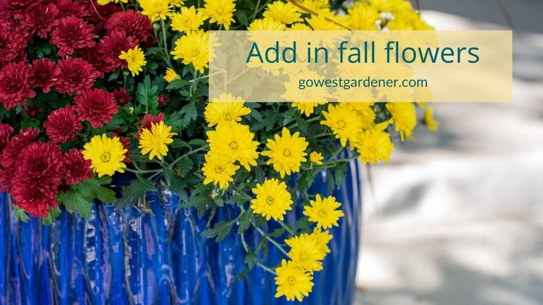 Before you empty your flowerpot, consider adding colorful fall mums, like in this blue flowerpot