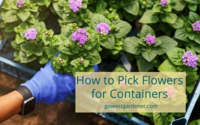 VIDEO: 4 Proven Tips to Pick Flowers for Planters (That Last!)