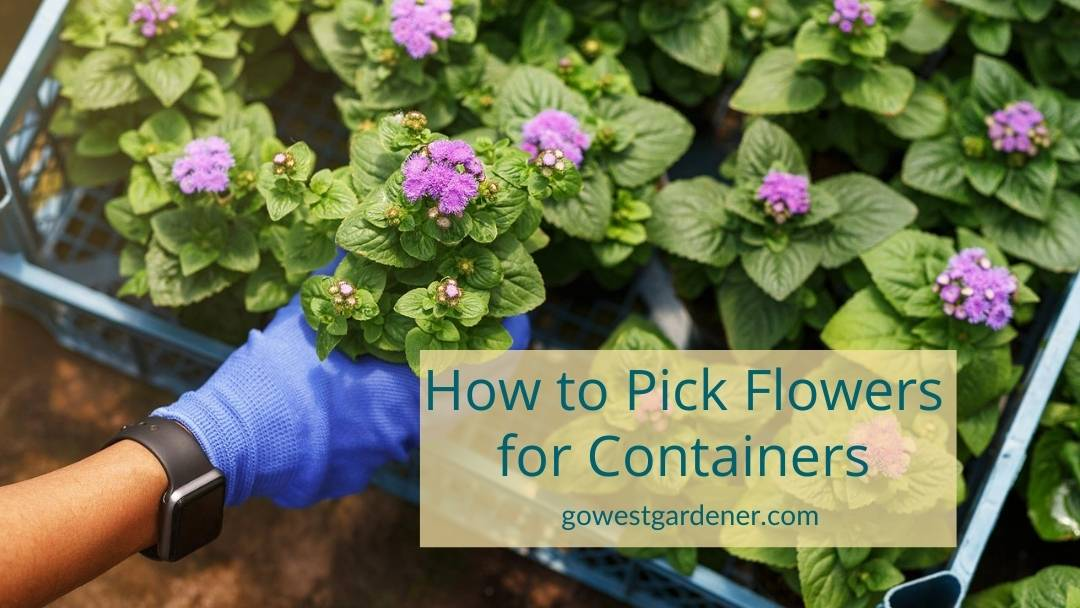 Tips on how to pick flowers for containers or flowerpots