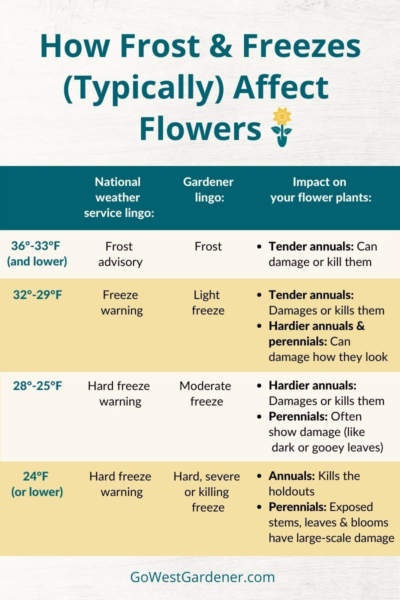 Infographic showing how frost, light freezes, moderate freezes and hard freezes affect annuals and perennials in states like Colorado and Utah