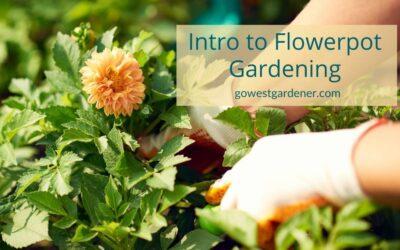 Flower Gardening Podcast: Find Your Confidence With Flowerpot Gardening