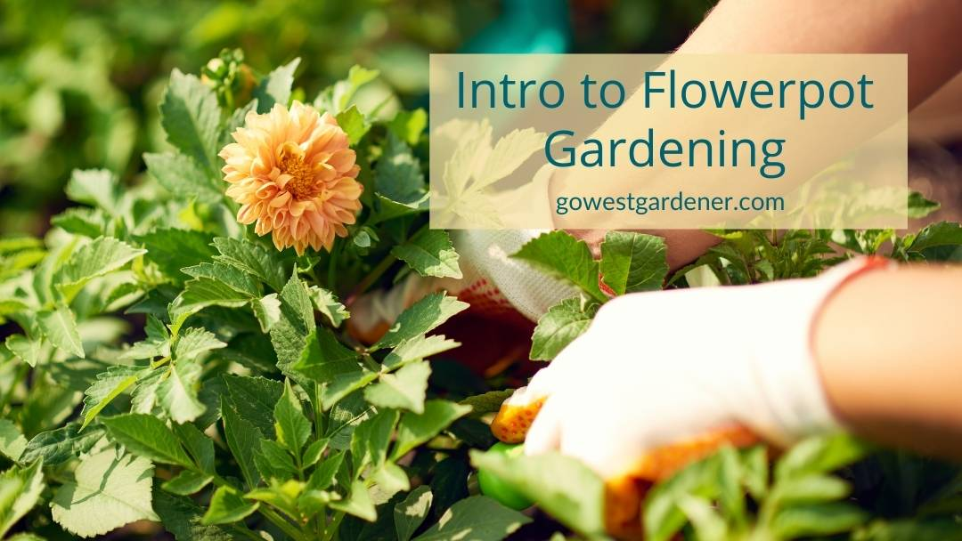 Podcast: An introduction to flowerpot gardening for beginner gardeners in western states like Colorado and Utah