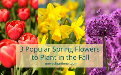 Popular Spring Flowers for Colorado and Utah… You Plant in the Fall
