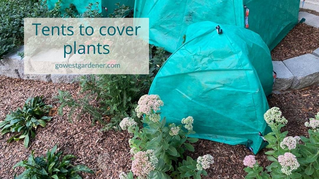 Pre-made tents made of commercial-grade landscape fabric to protect plants during frosts and freezes