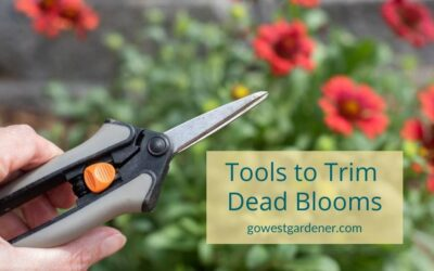 """""""When Trimming Dead Blooms, Should You Pluck Them by Hand or With a Tool?"""""""