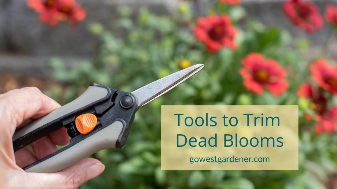 When plucking dead flowers or trimming dead blooms, it helps to use the right garden tools, like floral snips