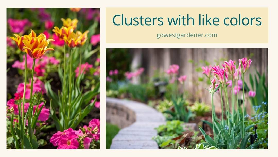Examples of spring bulb garden design: Tulips in pretty groupings for big pops of color in Colorado and Utah gardens.