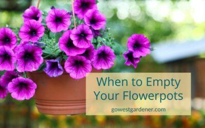 """""""When Should I Empty My Flowerpots?"""""""