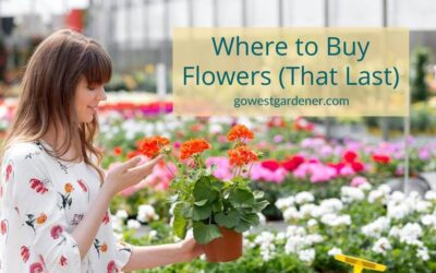 Where to Buy Flower Plants (That Last) for Your Western Garden