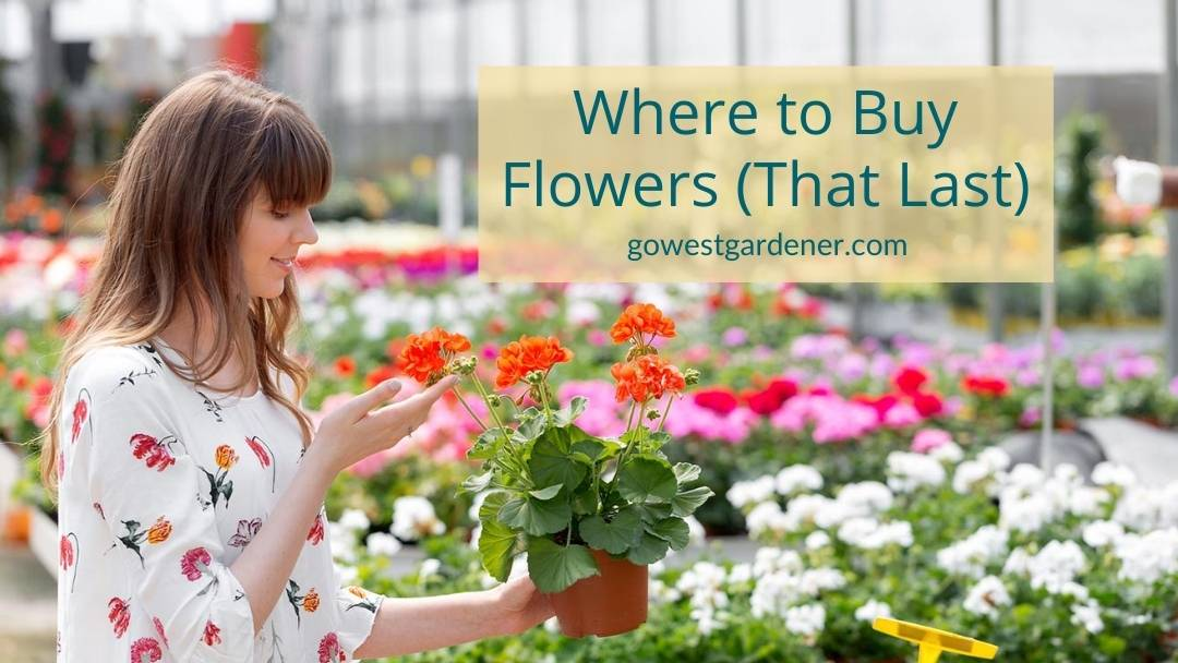 oung woman stands in a local garden center in Colorado. She figured out where to buy flowers for her garden in Colorado.