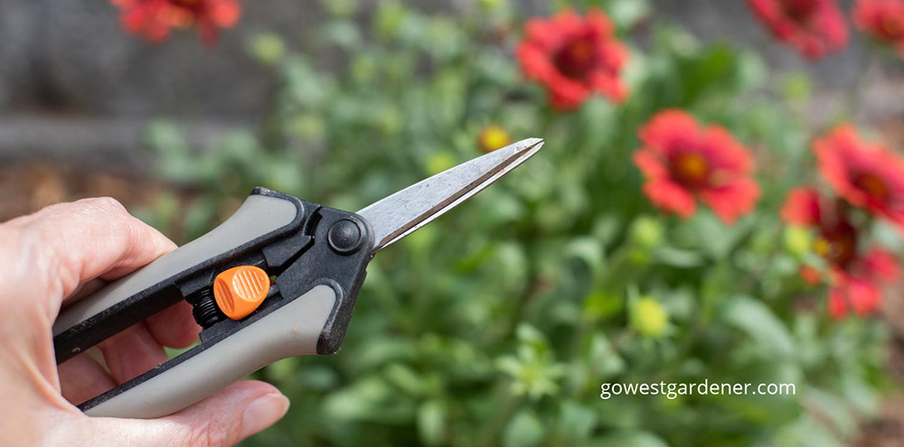Floral snips are an unusual gift idea for beginner gardeners