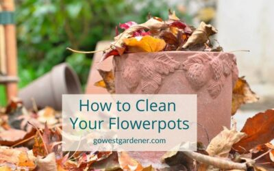 Flowerpot Clean-up Tips: What to Do With Your Flowerpots When Your Flowers Are Dead