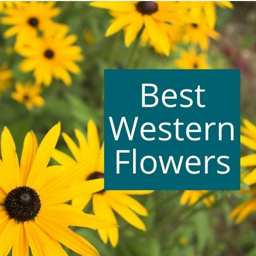 The best flowers for Colorado, Utah and the West