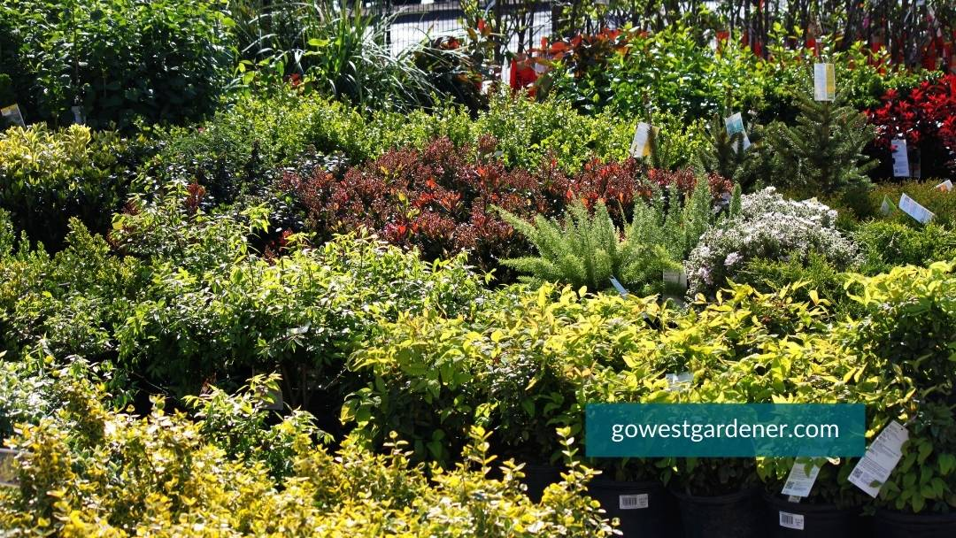 Big box stores have convenient garden centers, but their selection can be limited