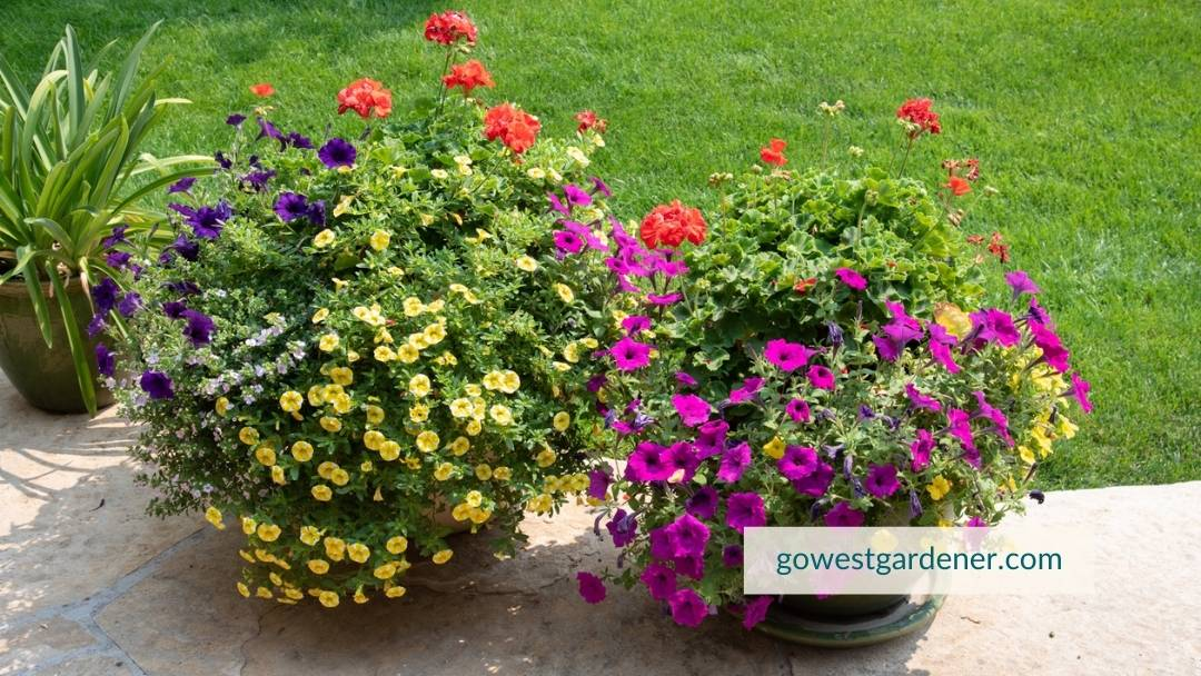 Planting flowers reduces stress and makes you feel better.
