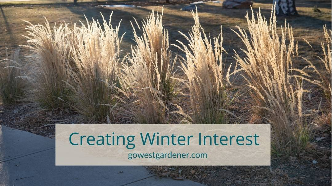 """""""How do I make my garden look good in the winter?"""" you may be wondering. Create winter interest with ornamental grasses!"""