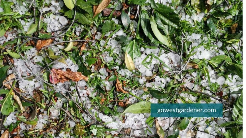 Hail clean-up tip: Rake up all the leaves and debris on the ground after a hail storm
