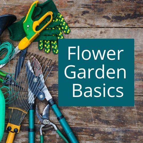 Flower garden basics for beginner gardeners