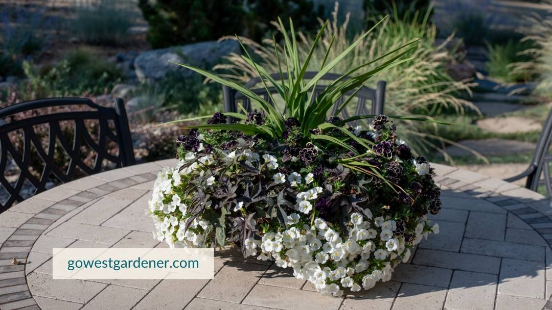 Planting flower pots is a way to enjoy your time at home.