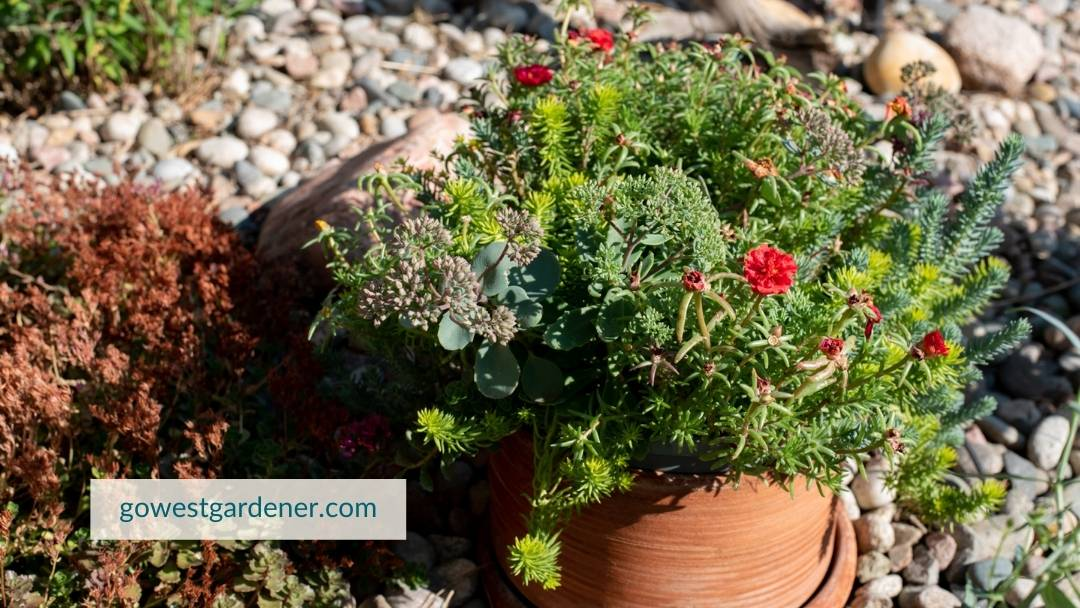 Growing flowers in pots is a way to reconnect with nature.