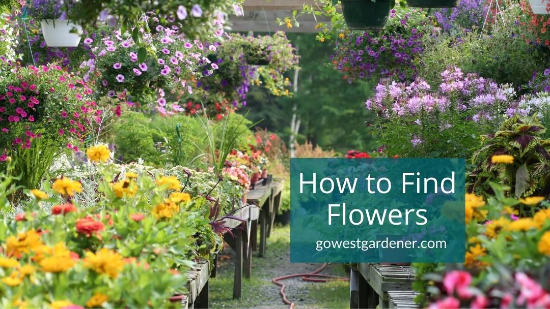 How to Find Flowers If Your Store Doesn't Have Them