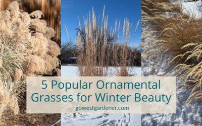 5 Popular Ornamental Grasses for a Prettier Winter Garden