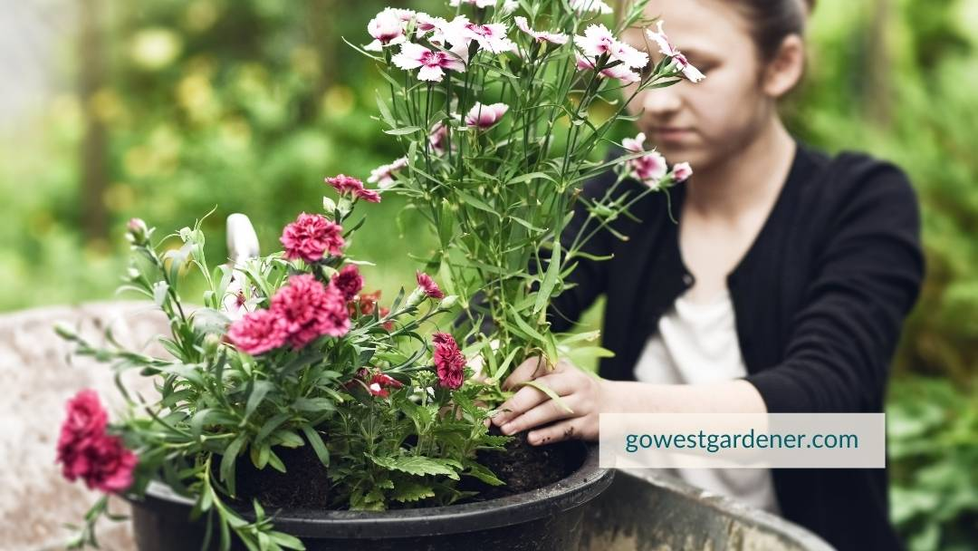 You can involve in your kids in planting flower pots.