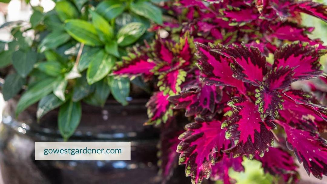 Why plant flower pots? You can get big color in one summer.