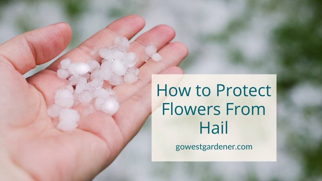 How to Protect Flowers From Hail Damage