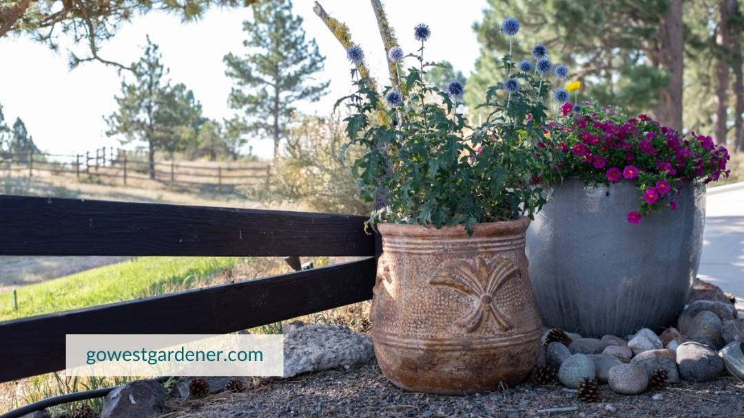Growing flower pots is very rewarding, whether your container garden is big or small.