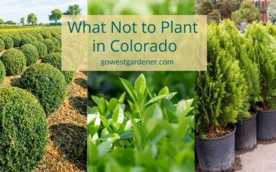 3 Plants That Struggle in Western Winters (What NOT to Plant in Your Colorado Landscape)