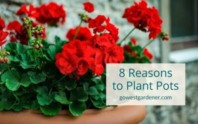 """""""Why Should I Plant Flower Pots This Summer?"""""""