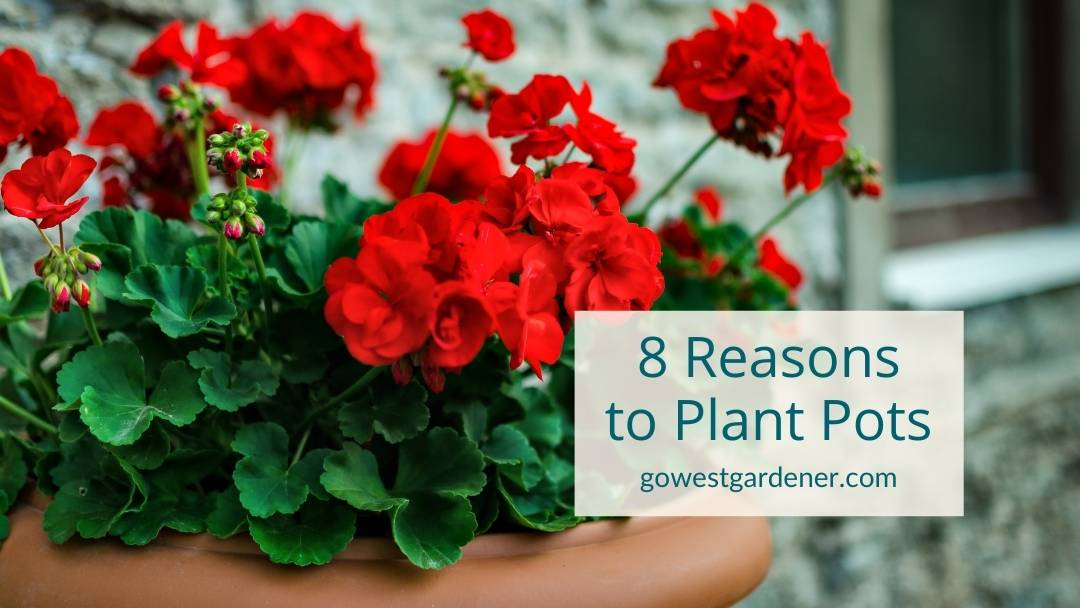 Why plants flower pots this summer? Here are 8 good reasons to do so!