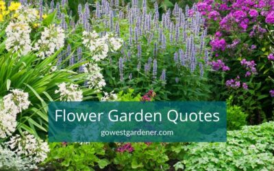 10 Flower Gardening Quotes (and Counting) for Flower Lovers