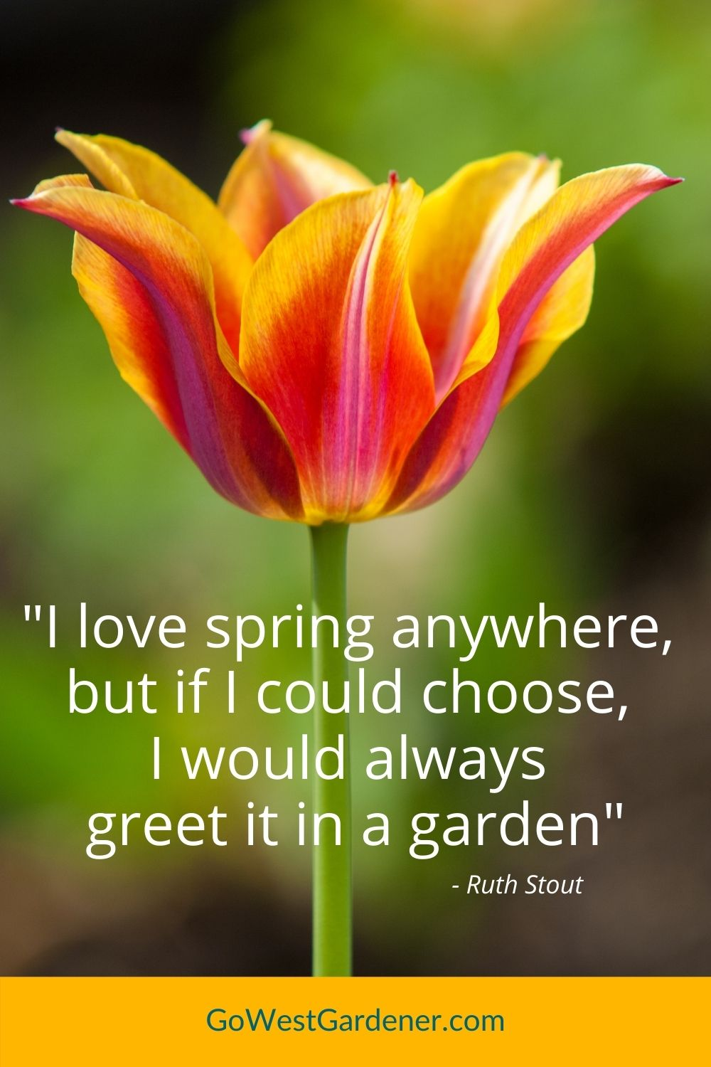 """Flower garden quote - """"I love spring everywhere, but if I could choose, I would always greet it in a garden"""" - Ruth Stout"""